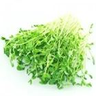 Picture of PEASHOOTS 100G